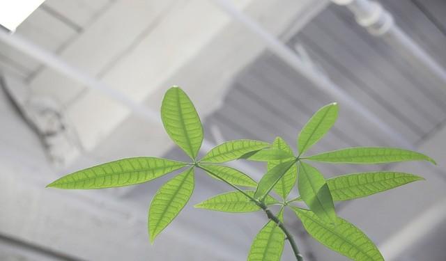 plant-406900_640