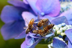 importanza api ecosistema